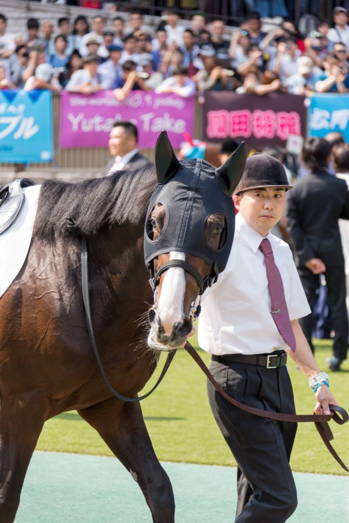 【ダンビュライト】写真で振り返るダンビュライトの日本ダービー2017