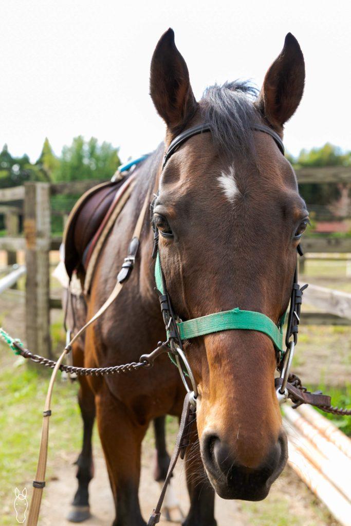 緑の馬牧場〜リベルタス・ロサギガンティア〜