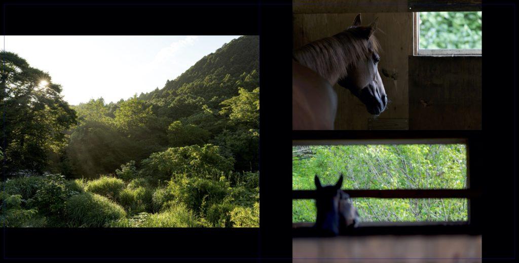 ときがわホースケアガーデン~養老牧場の7月28日~